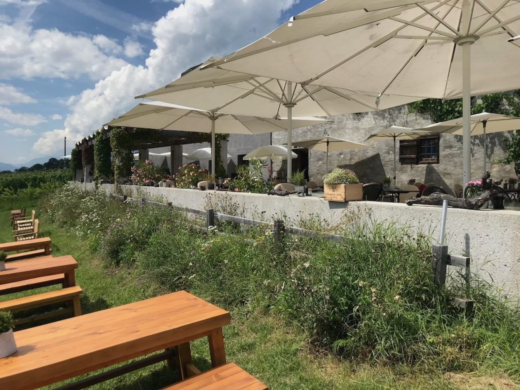 Die grosse Terrasse liegt mitten im Weinberg.